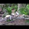 В зоопарке. Развивающее видео для малышей