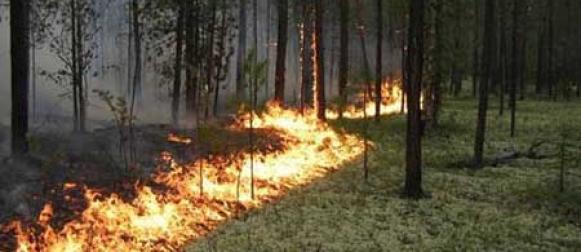 Красноярские школьники разработали проекты по предупреждению лесных пожаров