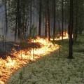 Более 100 школьников со всего края приняли участие в разработке проектов по предупреждению лесных пожаров
